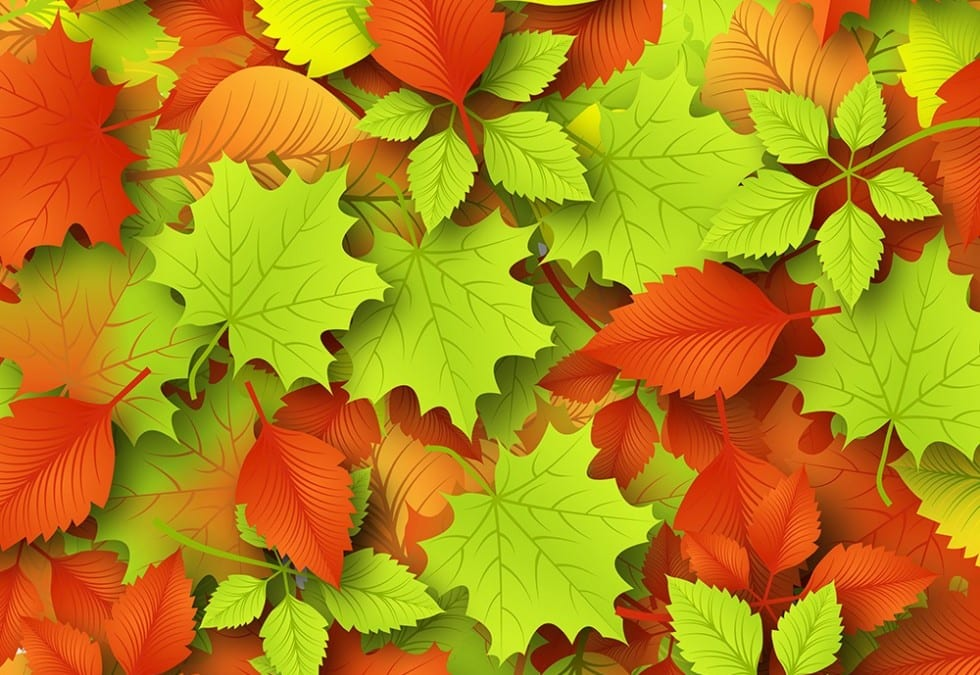 Creative Colorful Background: Autumn Leaf