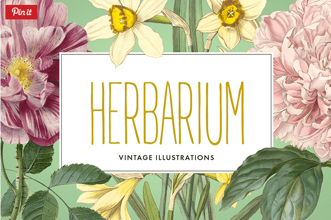 Collection Of 12 Vintage Flower Illustration