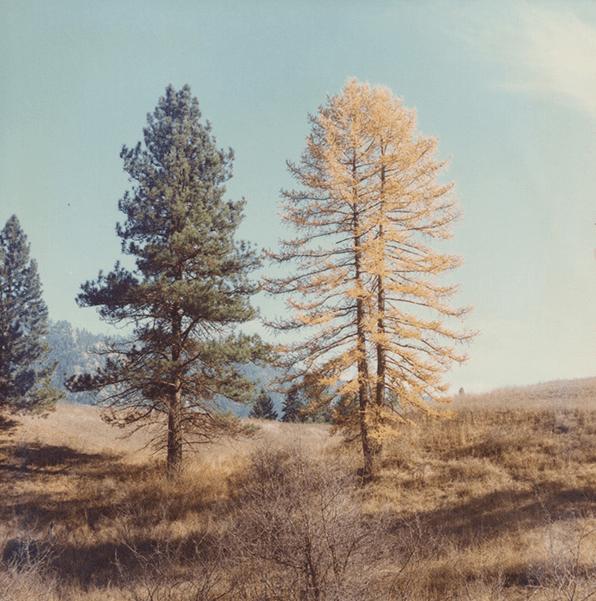Free 7 Vintage Nature Photographs